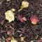 French Blend from Angelina&#x27;s Teas