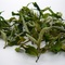 CLOUD - 9  CLONAL WHITE TEA. (1ST FLUSH  2013) from GOOMTEE TEA ESTATE
