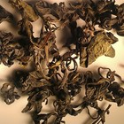 American Oolong from Zhi Tea
