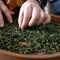 Hand Picked Early Spring Tieguanyin (2013) from Verdant Tea