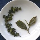 2008 Dong Pian - Si Ji Chun from Tea Masters Blog