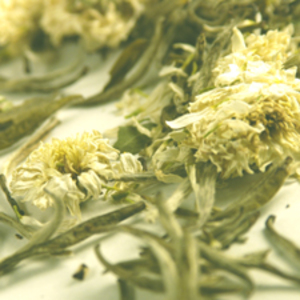 Chrysanthemum Silver Needle from Teas Etc