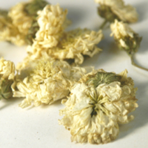 Chrysanthemum from Teas Etc