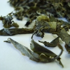 Emerald Green from Fresh Darjeeling Tea