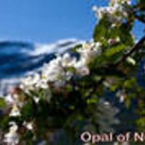 Opal of Norway from Adagio Teas
