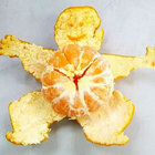 Mandarin Peel from Nature