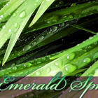 Emerald Spring from Adagio Teas