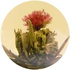 Lychee Blossom from Imperial Tea Court