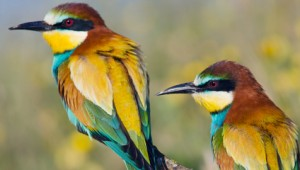 Rarest Birds in the World