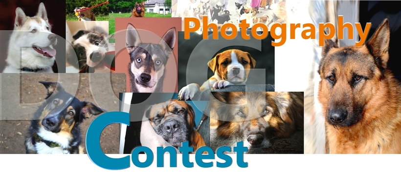 phtotography dog contest