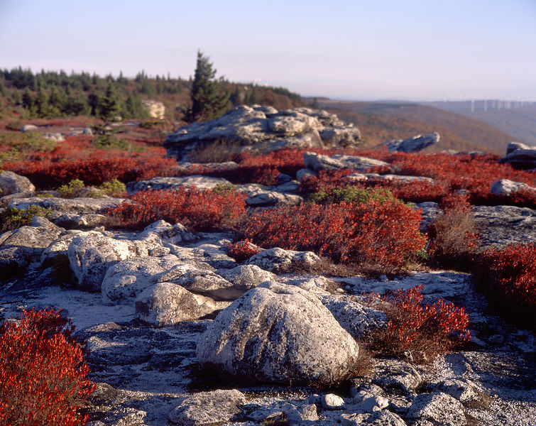 004-Blue_Ridge_D105081_White_Rocks__Red_Plants_-_Preview