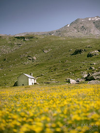 Yellow flowers on prairie and old house