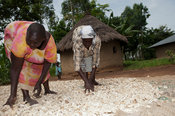 Kenyan women drying cassava on ground outside their homes, Bumala, Kenya.