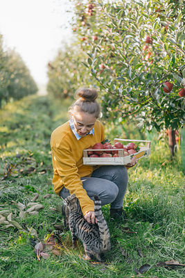 Young woman with crate and cat in apple orchard