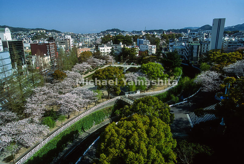 Cherry Blossoms.Peace Park, Nagasaki, Japan