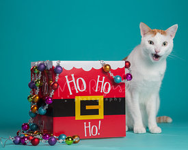 White and Orange Cat with Funny Expression Next to Holiday Christmas Box