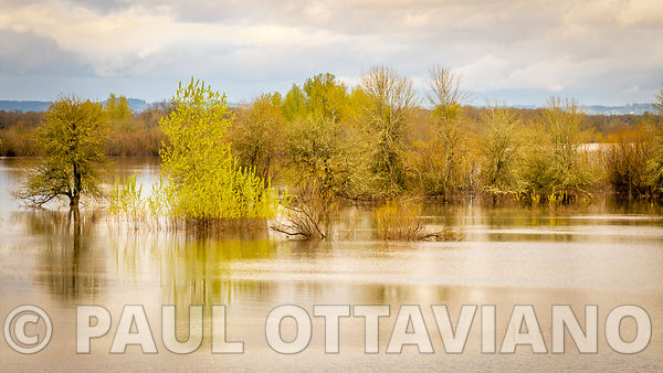 Sauvie Island Landscape 2 | Paul Ottaviano Photography