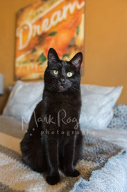 Black cat seated on bed in front of wall art