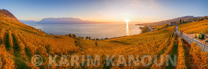 Panorama - Golden Vineyards - Lavaux | Autumn