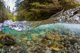 Rapids on the Dungeness River in Olympic National Forest