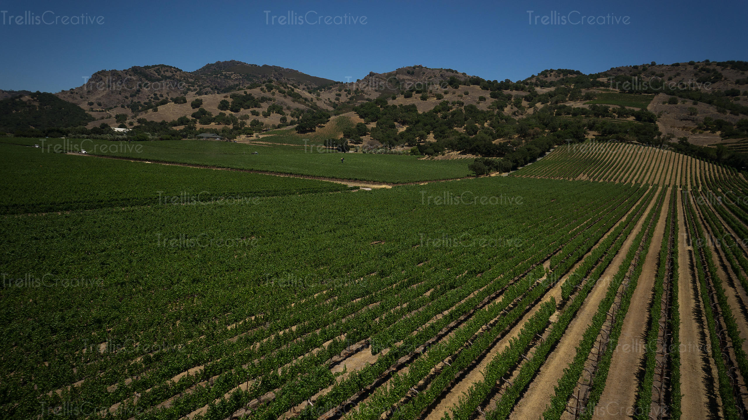 Vineyard in Stags Leap appellation in Napa Valley aerial photo
