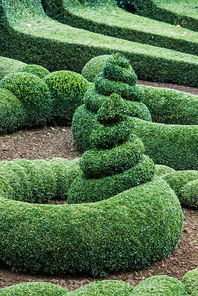 Tightly clipped swirls of box in the Parterre Garden. Bourton House, Bourton-on-the-Hill, Moreton-in-Marsh, Glos, UK