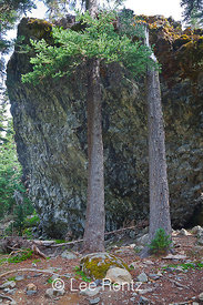 Shelter Rock in Royal Basin is Composed of Pillow Lava