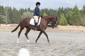 SI_Festival_of_Dressage_310115_Level_1_Champ_0709