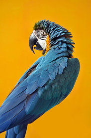 ACutting_bird_1032_copy
