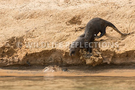 giant_otter_sand_slide-3