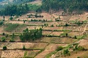 Terraced farmland in Rwandan mountains.