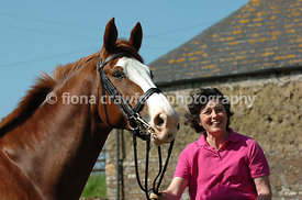 Chestnut gelding with lady in pink