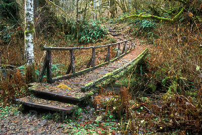Footbridge along the Hoh River, Olympic Rainforest, Washington.