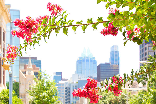 DOWNTOWN AUSTIN TEXAS IN SPRING