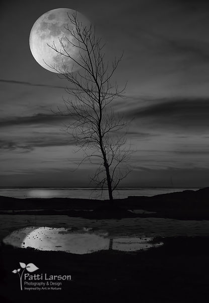 Lone Tree in the Full Moon