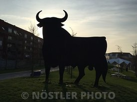 The Spanish Bull in Copenhagen