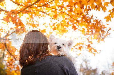 white terrier dog being held by owner with autumn leaves