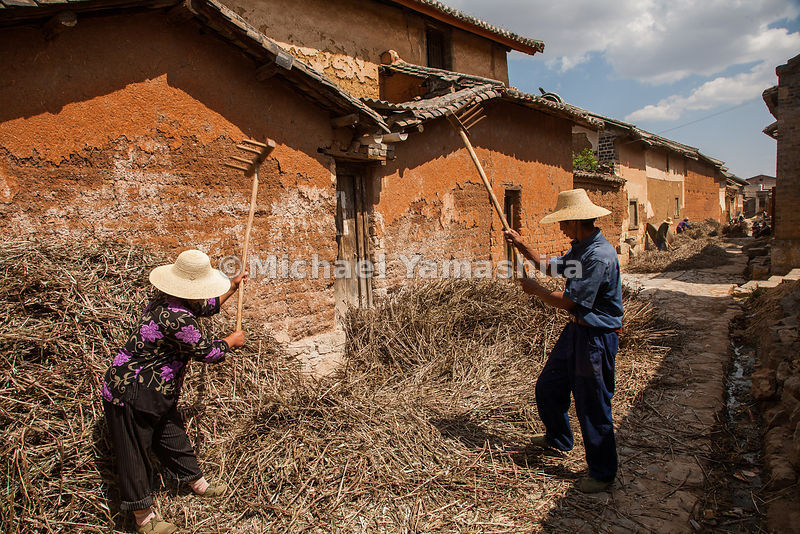 Farmers thrash their crop of Mung beans outside the weathered walls of Dali. The Tea Horse Road once ran through this picturesque high mountain village, which has remained unchanged for a thousand years.