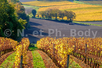 FRANCE, VIGNOBLE CHAMPIGNY//FRANCE, VINEYARD OF CHAMPIGNY
