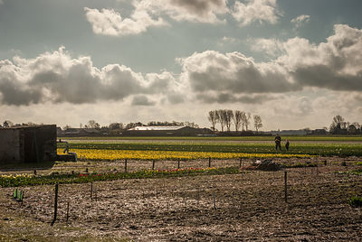 Dad and son on the Daffodil fields North Holland photos