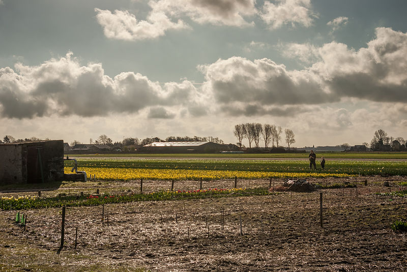 Father and son at work on the flower fields series 1of7