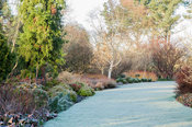Winter garden includes evergreens such as Euonymus fortunei 'Minimus' and clipped box, colourful stems such as Cornus sanguinea 'Midwinter Fire' and birches.  Sir Harold Hillier Gardens, Ampfield, Romsey, Hants, UK