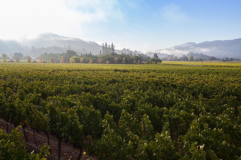 Commercial photo shoot for Napa Valley winery Kenefick Ranch of Calistoga, California.