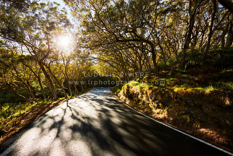 Beautiful forest road of Maido