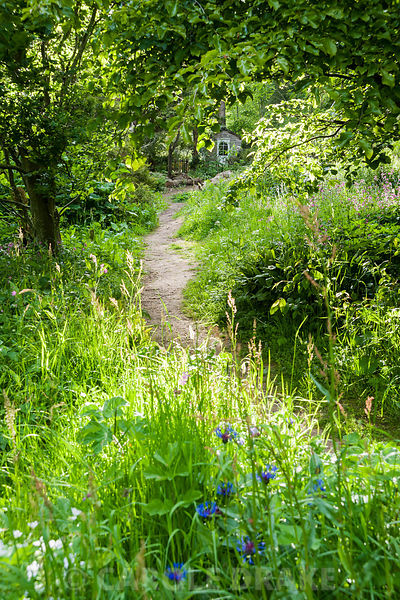 A path through the naturalistic Low Garden leads between long grasses, ferns, Solomon's Seal, perennial cornflower and red campion.