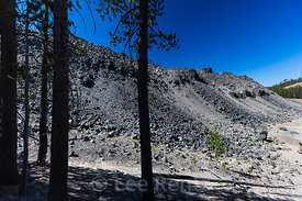 Lodgepole Pines and Lava Flow in Newberry National Volcanic Monument