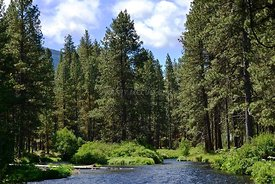 Camp Sherman Metolius River