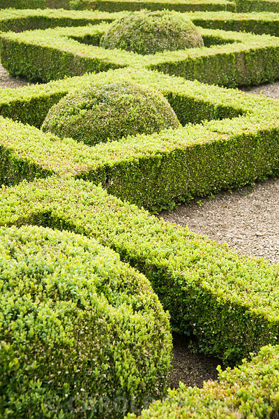 Box parterre in the Pigeon House Garden. Rousham House, Bicester, Oxon, UK