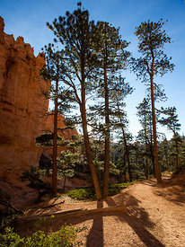 Bryce_Nation_Park_179