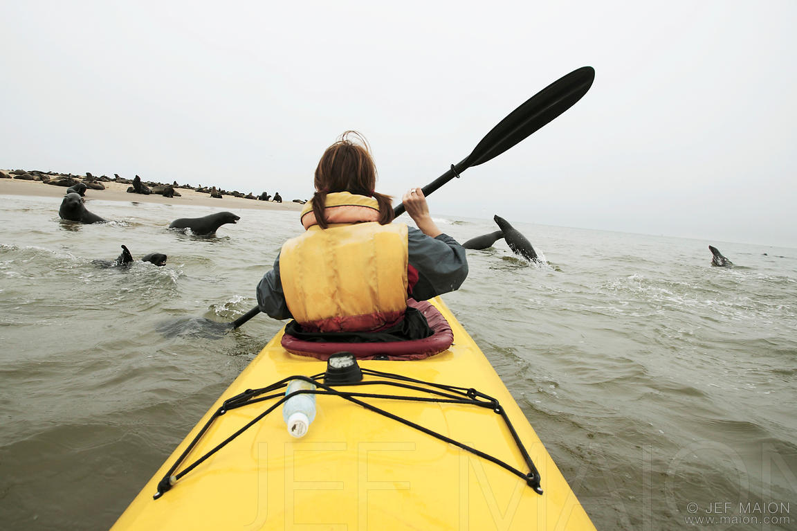 Kayak by seal colony